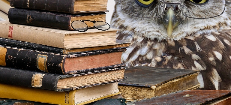 An owl and pile of books