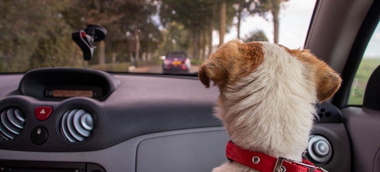 a dog in the car