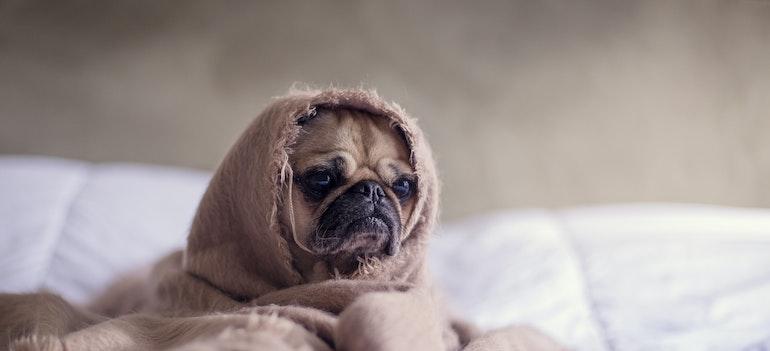 A mop in a blanket