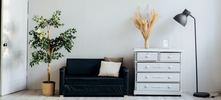 A plant, sofa, chest of drawers and a lamp