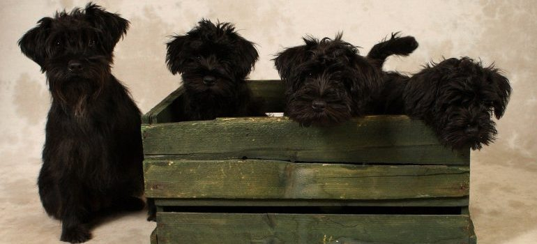 Moving with your dog to UK from USA in the best wooden crate