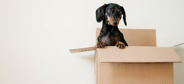 a black dog in a box